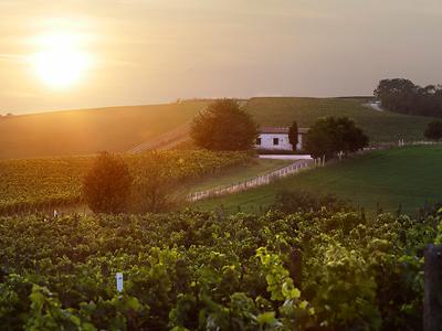 Vinařství Maryša - vinohrady